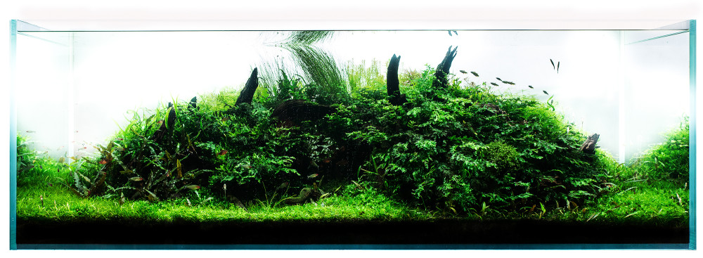 Silence before storm, 180x60x60cm nature aquarium, IAPLC 2013, autor: Adam Votava